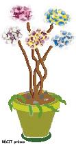 Images plantes